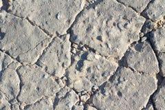 Gedetailleerd macro gebarsten cementwegdek royalty-vrije stock afbeeldingen