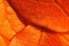 Gedetailleerde bladeren Stock Afbeelding