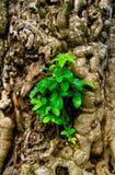 Gedetailleerde boomstam die het nieuwe leven ontspruit Royalty-vrije Stock Afbeelding