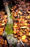 Gedetailleerde boomwortel en bladeren Stock Foto's