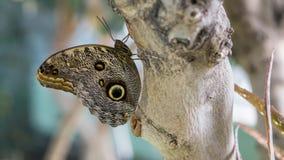 Gedetailleerde Close-up van een exotische vlinder stock fotografie