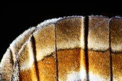 Gedetailleerde macro van vlindervleugel Royalty-vrije Stock Afbeelding