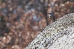 Gedetailleerde mus op een rots met een achtergrondhoogtepunt van lichten Royalty-vrije Stock Afbeeldingen