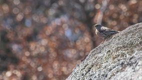 Gedetailleerde mus op een rots met een achtergrondhoogtepunt van lichten Stock Fotografie