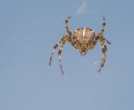 Gedetailleerde spin in het net Stock Foto