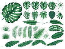 Gedetailleerde tropische bladeren en installaties, vectorinzameling geïsoleerde elementen vector illustratie