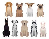Gedetailleerde vlakke vectorreeks honden van verschillende rassen Koe en stier Ontwerp voor affiche van dierlijke kliniek, kennel vector illustratie