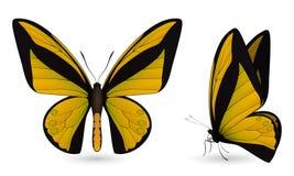 Gedetailleerde vlinderelementen Voor en zijaanzicht Royalty-vrije Stock Foto