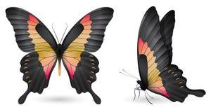 Gedetailleerde vlinderelementen Voor en zijaanzicht Royalty-vrije Stock Fotografie