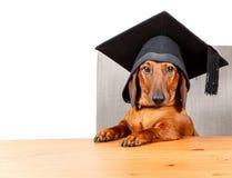 Gediplomeerde student bij de lijst met tekstgebied Stock Foto