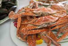 Gedämpfte Krabbe Lizenzfreie Stockbilder