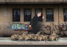 Gedrängte Stadt, Ratten-Rennen, Ratten Stockfotos