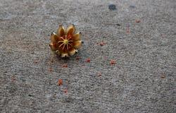 Gedroogd fruit op de stoep Royalty-vrije Stock Fotografie