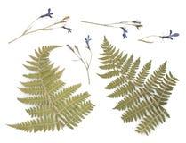 Gedrukt Droog Herbarium van Diverse Installaties stock foto's