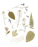 Gedrukt Droog Herbarium van Diverse Installaties royalty-vrije stock foto's