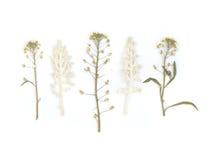Gedrukt Droog Herbarium van Diverse Installaties stock fotografie