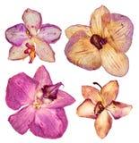 Gedrukt en droog koraal, roze bloemorchidee geïsoleerde elementen o stock foto