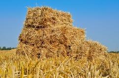 Gedrukte balen van stro die in een gebied na oogst liggen Royalty-vrije Stock Fotografie