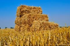 Gedrukte balen van stro die in een gebied na oogst liggen Stock Afbeeldingen