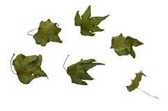 Gedrukte bladeren van komkommer Stock Foto's