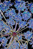 Gedrukte bloem Royalty-vrije Stock Afbeelding