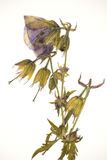 Gedrukte bloem Stock Fotografie