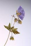 Gedrukte bloem in backlight royalty-vrije stock foto