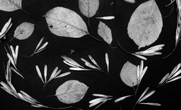 Gedrukte flora op dark royalty-vrije stock foto