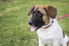 Geduldiger Hund lizenzfreie stockbilder