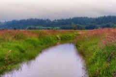 Gee Creek na área dos animais selvagens de Ridgefield imagens de stock royalty free