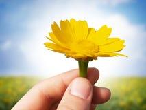 Geef bloemen royalty-vrije stock afbeelding