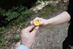 Geef een kleine bloem stock foto's