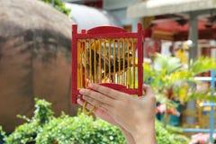 Geef een vogel vrij (voor verdienste) Geloven van Boeddhisme stock afbeeldingen