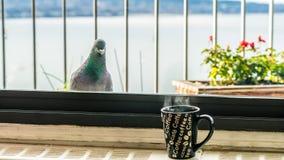 Geef me koffie, tevreden Royalty-vrije Stock Foto