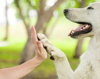 Geef me vijf - Hond die zijn poot drukken tegen een vrouwenhand Stock Afbeelding