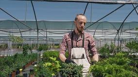 Geeft de jonge mannelijke tuinman van het close-upportret in serre, zeldzame installaties gebruikend de tentoonstelling van de de stock footage
