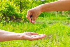 Geeft hand in hand muntstukken op groene achtergrond, Financiënconcept en leningen stock afbeelding