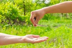 Geeft hand in hand muntstukken op groene achtergrond, Financiënconcept en leningen royalty-vrije stock foto