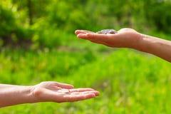 Geeft hand in hand muntstukken op groene achtergrond, Financiënconcept en leningen stock fotografie