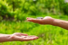Geeft hand in hand muntstukken op groene achtergrond, Financiënconcept en leningen stock afbeeldingen