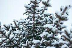 Geeignete Niederlassungen der Fichte unter dem Schnee Lizenzfreie Stockbilder