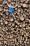 Geeigneter Bergsteiger, der den großen Stapel von hölzernen Klotz des Schnittes hinuntergeht Stockfotografie
