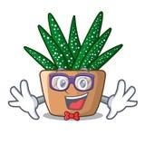 Geek character small zebra cactus plant on pot. Vector illustration royalty free illustration
