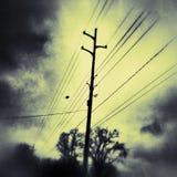 geel Stock Foto's