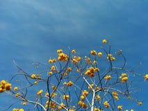 Geel andeblauw: bloem en hemel Royalty-vrije Stock Afbeelding