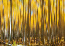 Geel Aspen Tree Abstract Motion Blur Royalty-vrije Stock Afbeeldingen