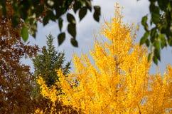 Geel Autumn Tree van mijn Stad royalty-vrije stock afbeelding