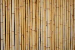 Geel bamboe Royalty-vrije Stock Foto