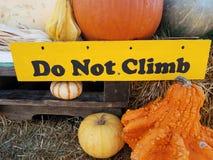 Geel beklim geen teken dichtbij oranje pompoenen stock afbeeldingen