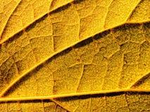 Geel blad stock fotografie